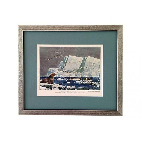 Framed Antique Penguins & Sea Elephant Lithograph
