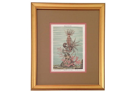 Framed Antique Coral & Sea Print, 1887