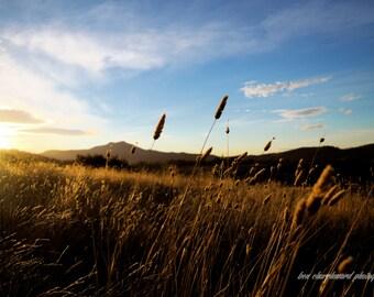 Sunset Field. Colour landscape photography art print.