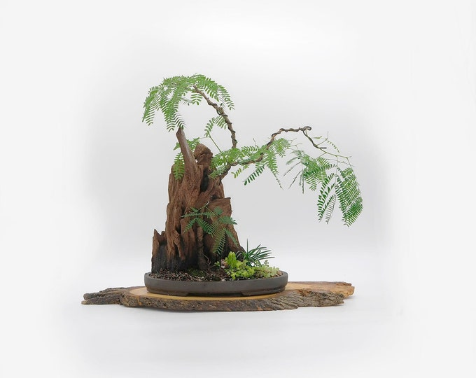 """River Tamarind Phoenix graft bonsai composition, """"Zen for Home"""" collection from LiveBonsaiTree"""