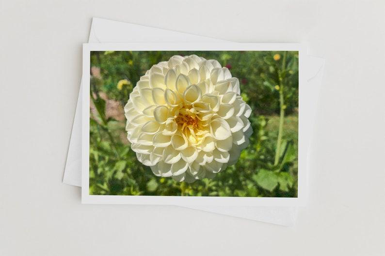 Handmade Nature Photo Art Note Cards with Envelopes Dahlia image 0