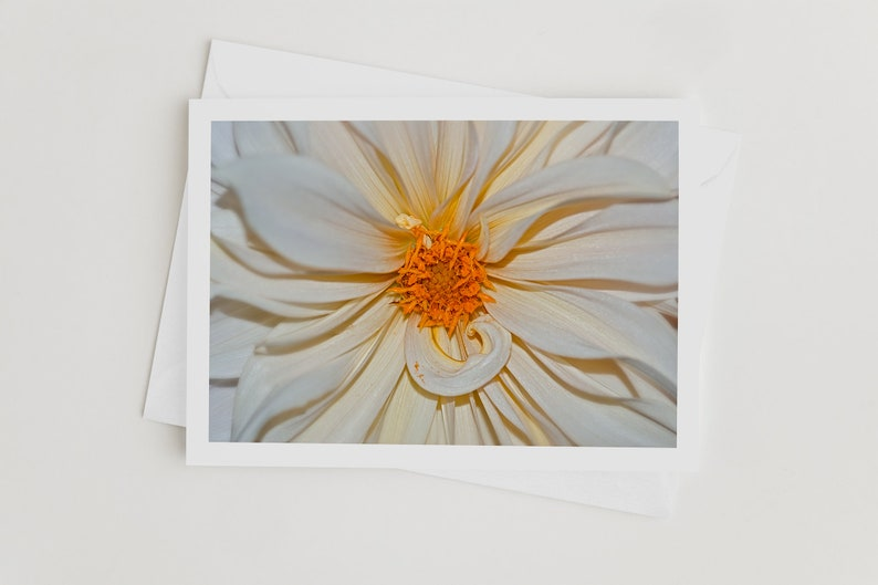 Handmade Nature Photo Greeting Cards Dahlia Flower Photo image 0