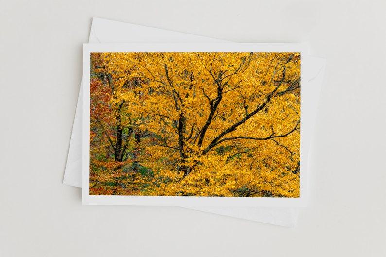 Elegant handmade photo greeting cards Nature Photo Art Cards image 0