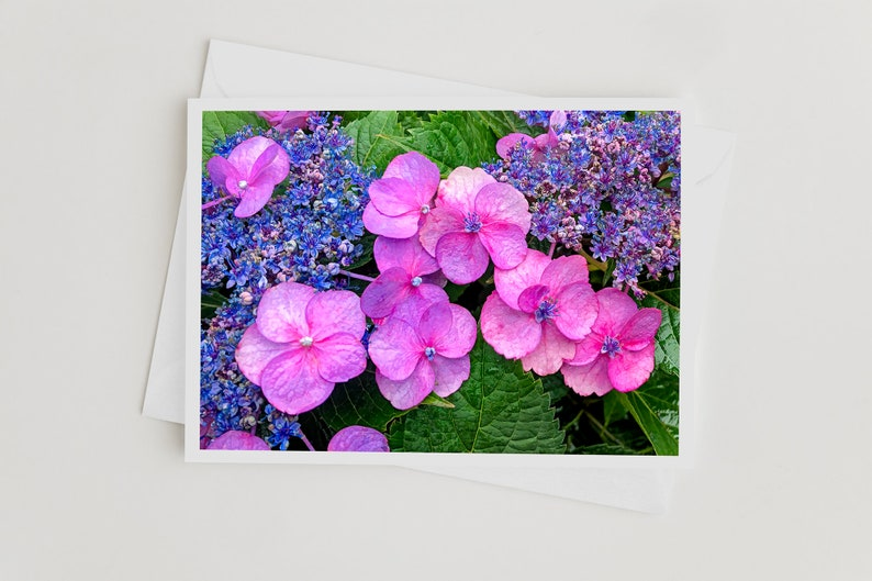Nature Photo Art Greeting Cards Hydrangea Photo Card with image 0