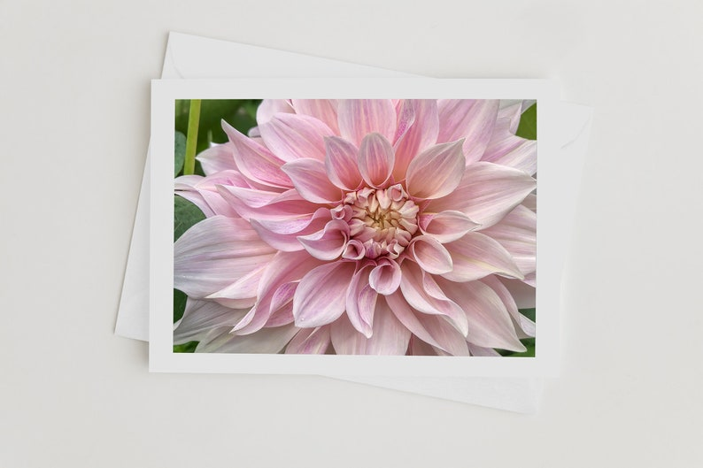 Nature Photo Greeting Cards Dahlia Flower Photo Card with image 0