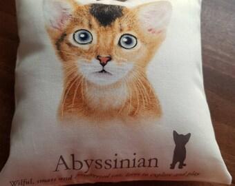 Abyssinian Cat Price Uk