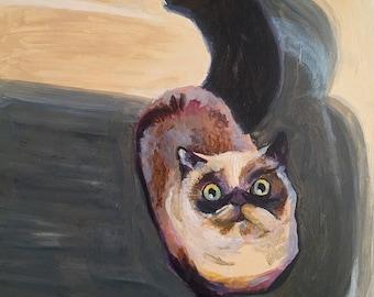 Tub Kitty