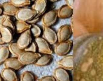 Heirloom Seminole Indian Squash Seeds - 10