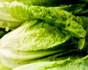 Hierloom Romaine Lettuce Seeds - 20