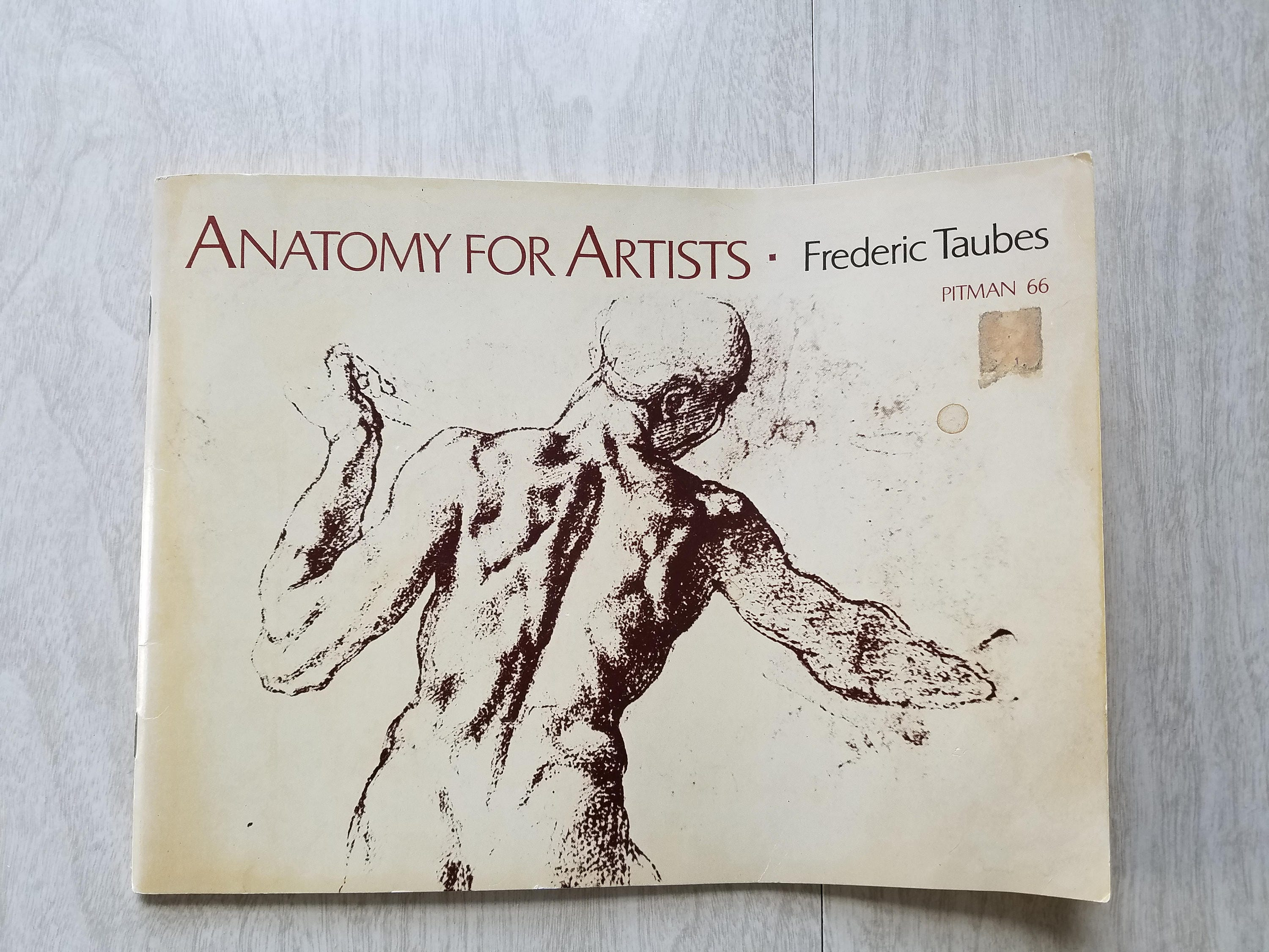 Vintage Human Form Art Book Anatomy for Artists by