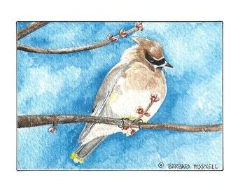 Handmade No 529  Cedar Waxwing Note Cards Cedar Waxwing Watercolor