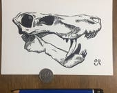 Gorgonopsid Skull - Origi...