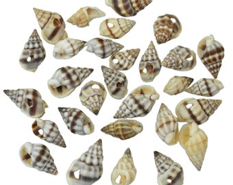 6 Drilled Spiral Sea Shell charms Seashells Beach Cottage Decor Nautical NSS001