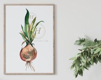 Large Onion Kitchen Wall Art Print