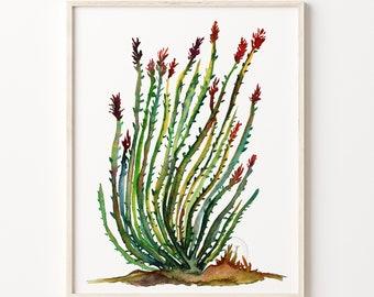 Ocotillo Cactus Watercolor Print, Artwork