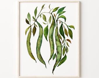 Snow Pea Botanical Print