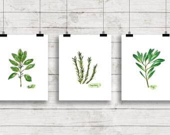 Herb Watercolor Prints Herb Print Set Botanical Prints Giclee Herb Prints Kitchen Art Botanical Watercolor Culinary Herbs Herb Cooking Art