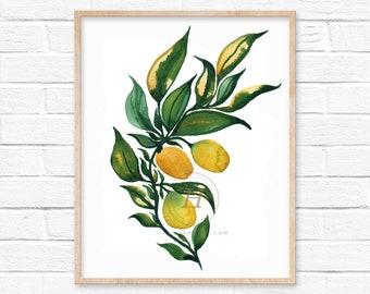 Kumquat Watercolor Print