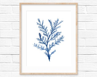 Sea Coral Blue Watercolor Print No.11143, Sea Life Art Print, Coral Art Print, Watercolor Art Print, Giclee Print, Sea Coral Beach Art Decor