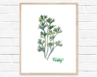 Watercolor Parsley Herb Print