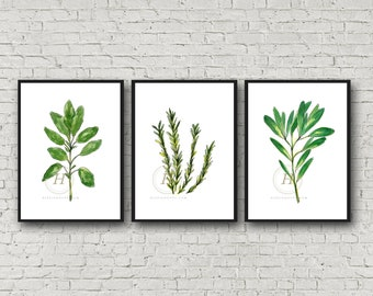 Herb set of 3, Watercolor Herbs, Basil, Rosemary, Sage, Wall Art