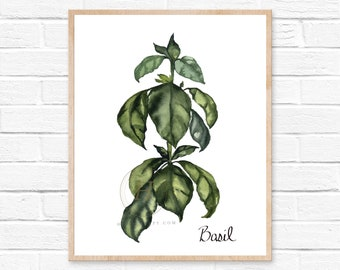 Herbs Kitchen Decor, Basil, Herbs Decor Print, Watercolor Print, Natural Kitchen Art, Kitchen Print, Herbs, Kitchen Decor, Basil Poster
