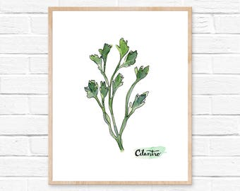 Watercolor Cilantro Print No.101, Herbs Kitchen Decor, Cilantro, Watercolor Print, Kitchen, Herbs, Kitchen Art, Spice Print, Natural Kitchen