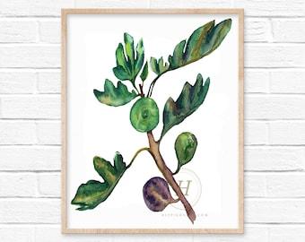 Fig Watercolor Print