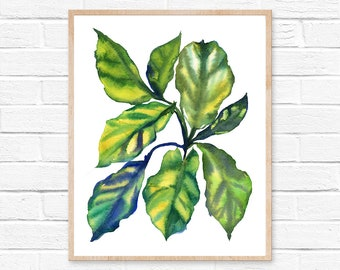 fiddle leaf fig watercolor botanical art plant painting print art home decor botanical print botanical green houseplant art print fig tree
