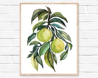Limes, Watercolor Print, Modern Art by hippiehoppy