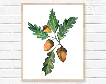 Watercolor Acorn Prints