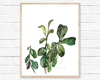 Art Print: Fiddle Leaf Fig by HippieHoppy