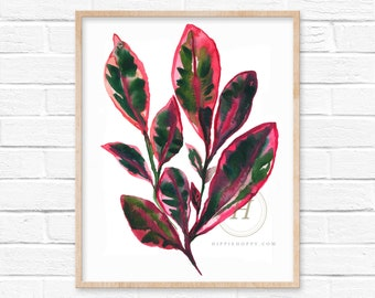 Stromanthe Triostar Plant Watercolor Print