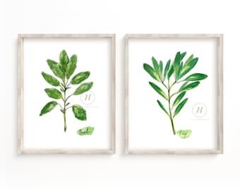 Herbs Basil and Sage Watercolor Print Set of 2