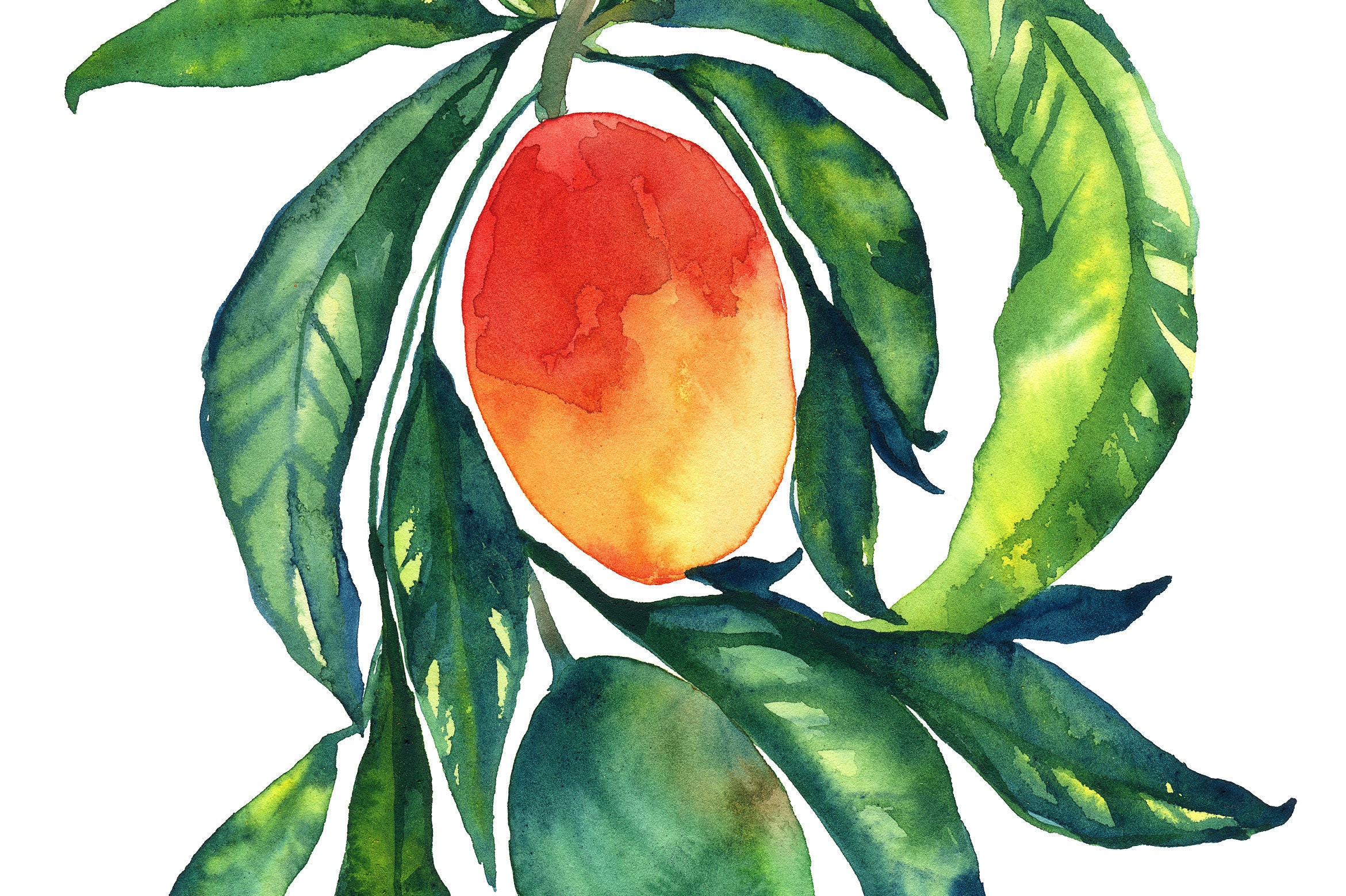 Decorating With Colors Mango: Mango Watercolor Fruit Watercolor Painting Home Decor