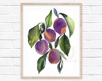 Plums Watercolor Print