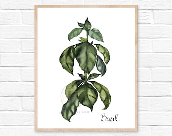 Herbs Kitchen Decor, Basil Print