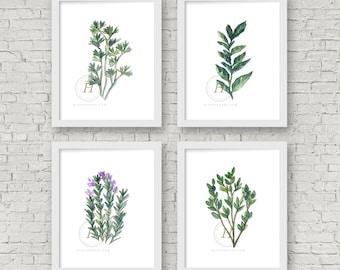 Herb Set of 4 Prints Parsley Basil Rosemary Oregano Watercolor Prints