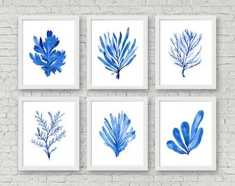 Nautical Set Coral and Seaweed Set of 6 Prints