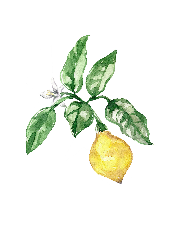 Lemon no 102 lemon watercolor art vintage inspired lemon art lemon watercolor print fruit print kitchen lemon art lemon decor yellow art