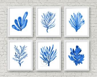 Coastal Wall Art Blue Seaweed Print Watercolor Set of 6 Prints