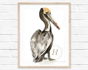 Large Pelican Watercolor Art Print