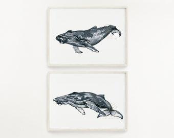 Humpback Whale Watercolor Prints set of 2