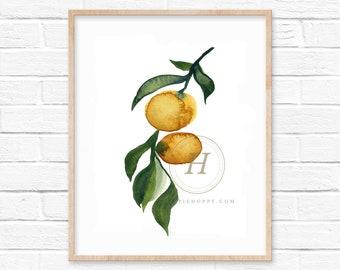 Orange Tree Watercolor Print Kitchen Art