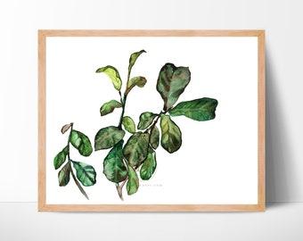 Fiddle Leaf Fig Watercolor Art Print Unframed