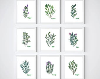 Herb Collection Set of 9 Prints, Green Herb Watercolor Painting, Sage, Rosemary, Parsley, Basil, Oregano, Tarragon, Dill, Bay Leaves, Herbal