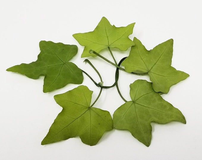 Green, Ivy leaf, preserved leaves, preserved flowers, green leaf, home decor, wedding decor, green leaves, floral arrangements
