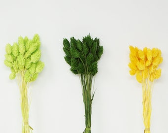 Dried phalaris, dried flowers, preserved flowers, wedding decor, home decor, pin flowers, dried grass, wedding boutonniere, canary grass