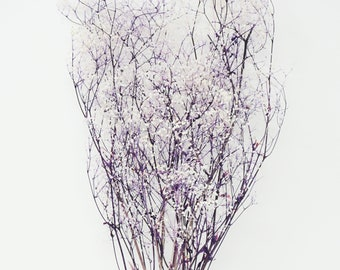 Mini soft baby's breath 2 tones of white & purple, preserved flowers, home decor flowers, wedding flowers, pink flowers, wedding boutonniere