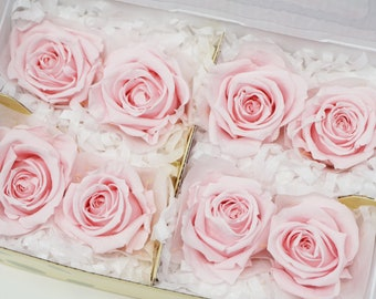 8 milky pink, preserved roses, real roses, pink roses, preserved rose, preserved flowers, home decor, wedding decor, wedding roses